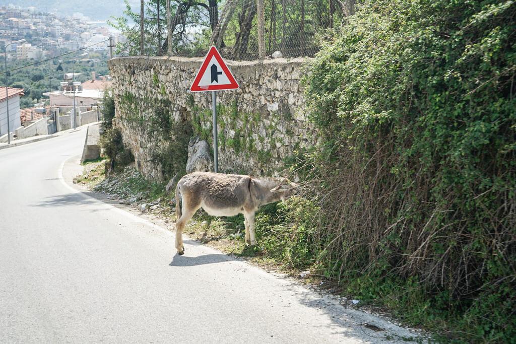 Esel a Strassenrand Kopf im Gebüsch, Albanien Reisen