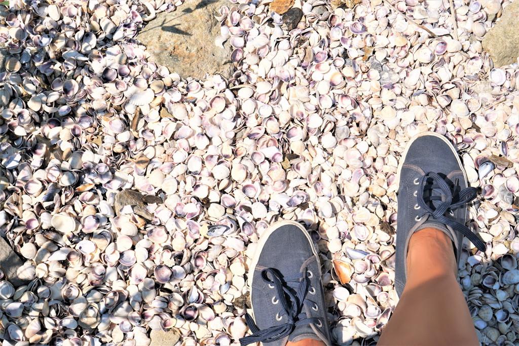 Muscheln Bulgarien Strand Schwarzes Meer