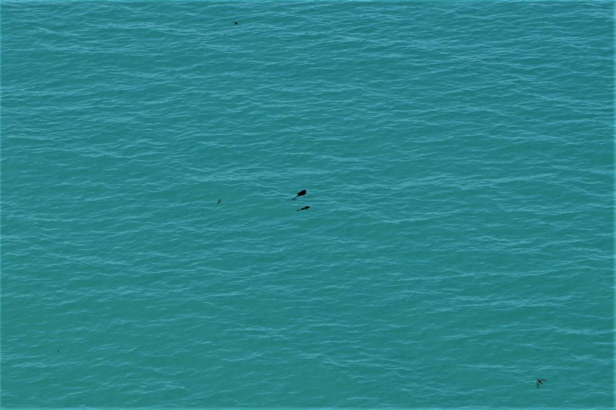 Delfine beobachten in Bulgarien