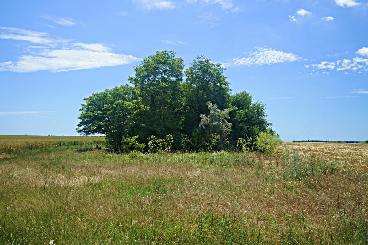 Waldschutzstreifen in Bulgariens Norden