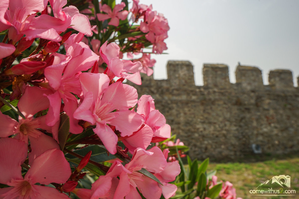 Rosa blühender Oleander in der Burg von Kavala - Sehenswürdigkeiten Kavala