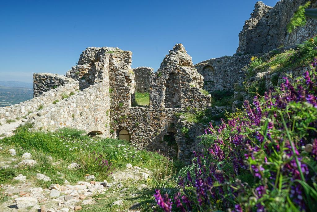 Ruinen, violette Blumen, Mystras, Griechenland Sehenswürdigkeiten