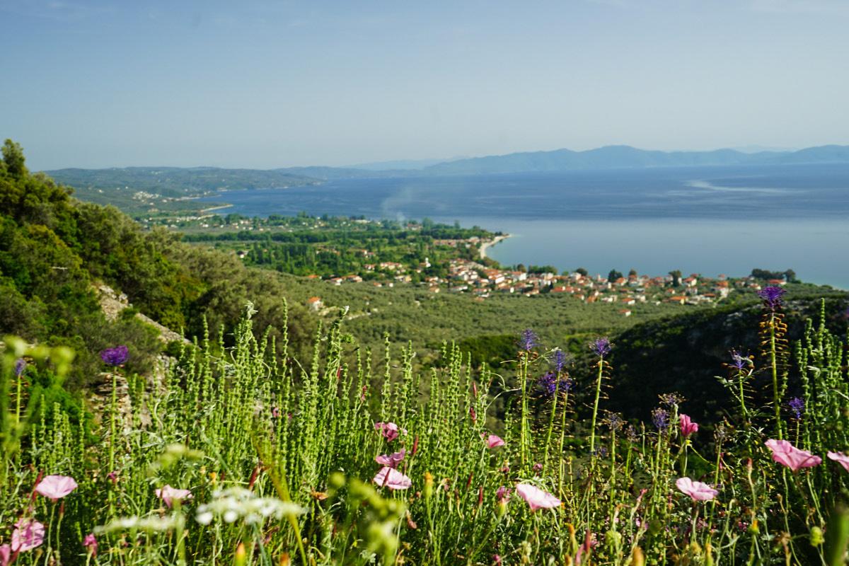 Violette und rosa Blüten, grüne Hügel, Küstenort und Golf, Schienenwanderung, Pelion, Pilion, Griechenland