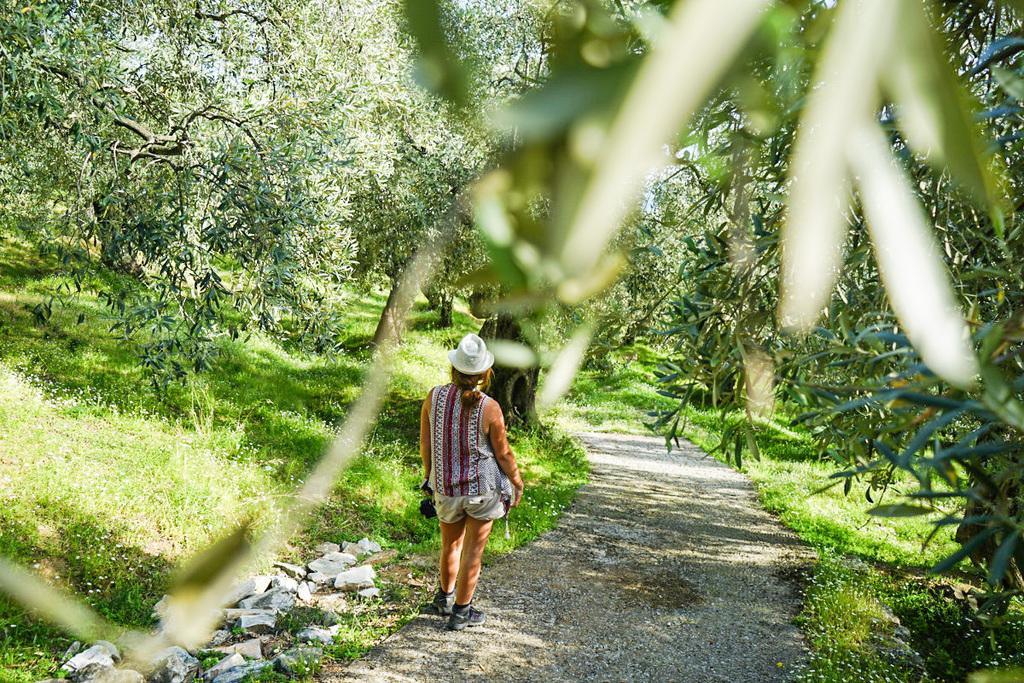 Steffi läuft zwischen Olivenbäumen, Schienenwanderung, Pelion, Pilion, Griechenland