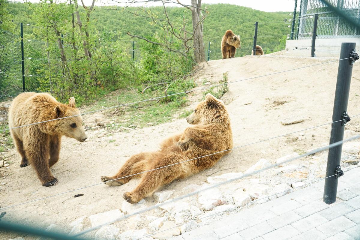Bärenpark Kosovo, Sehenswürdigkeiten