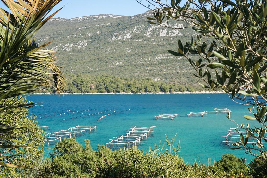 Türkisfarbenes Meer mit Bojen im Wasser für Netze - Mali Ston, Sehenswürdigkeiten Kroatien