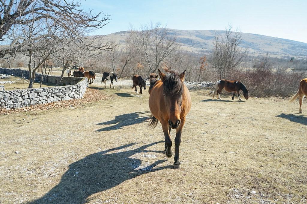 Pferde laufen uns nach - Wildpferde in Bosnien-Herzegowina