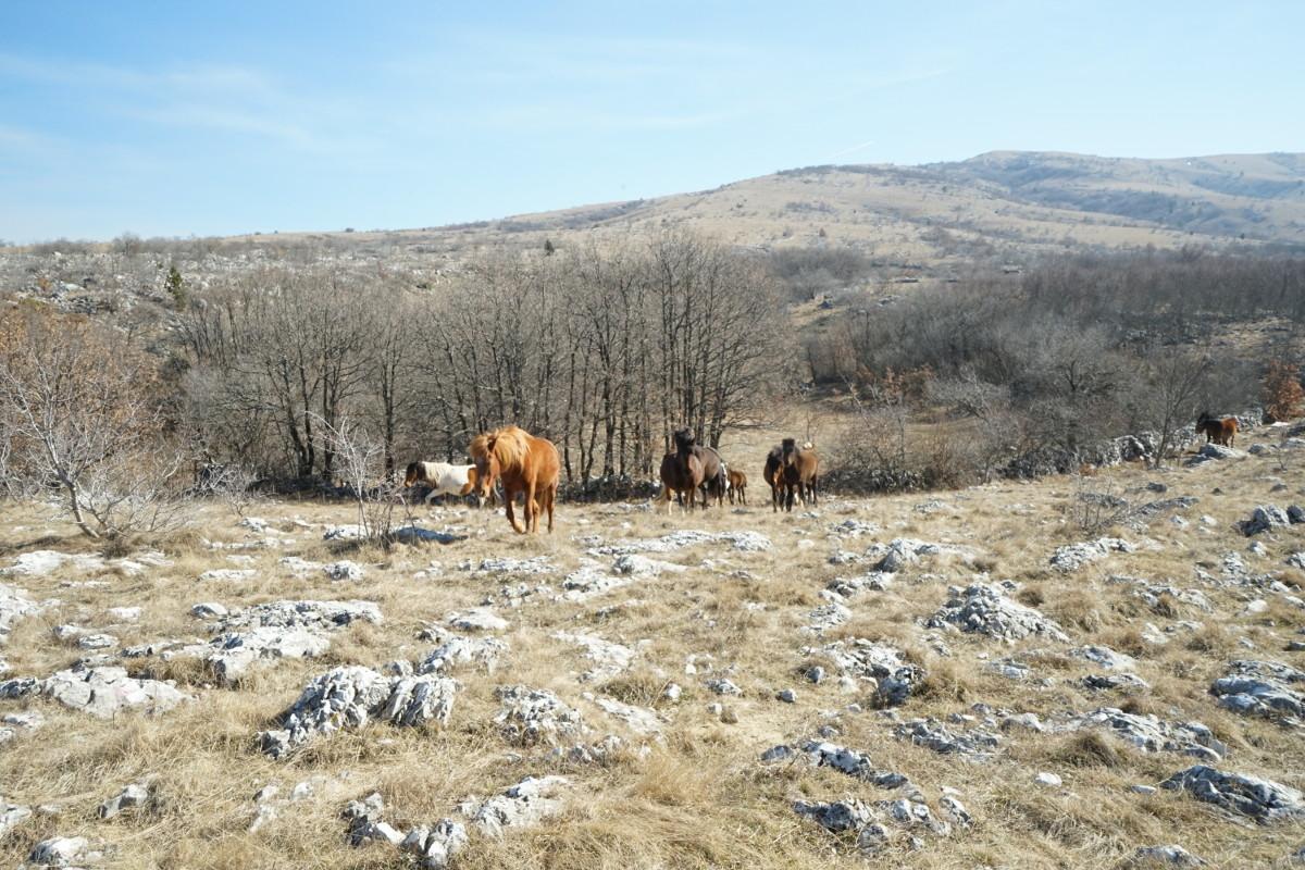 Pferde kommen auf uns zu - Wildpferde in Bosnien-Herzegowina