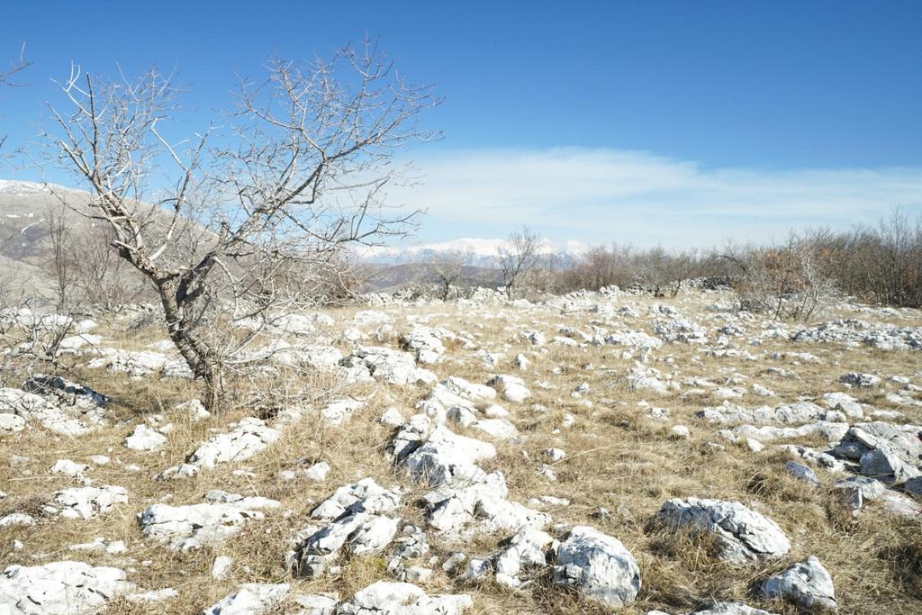 Gras und Steinlandschaft mit Büschen - Wildpferde in Bosnien-Herzewogina