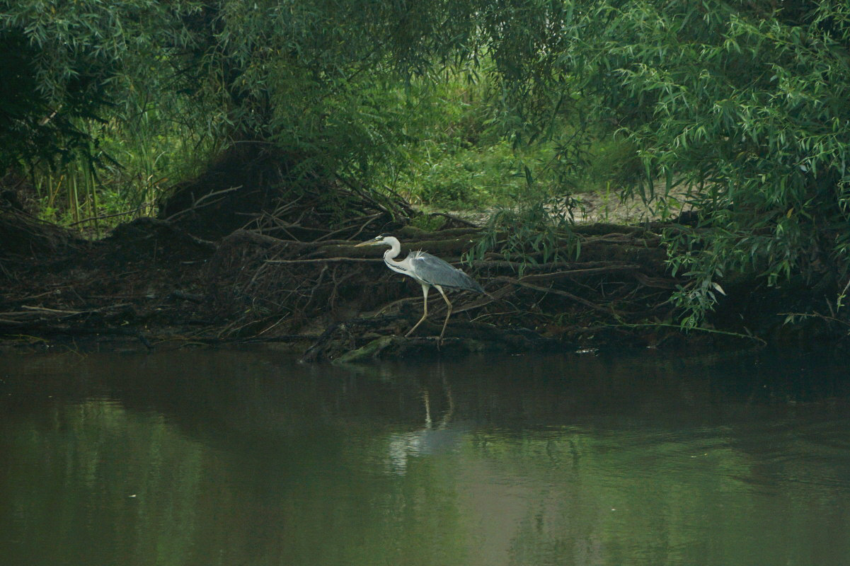 Donaudelta Vogelerkundung per Boot