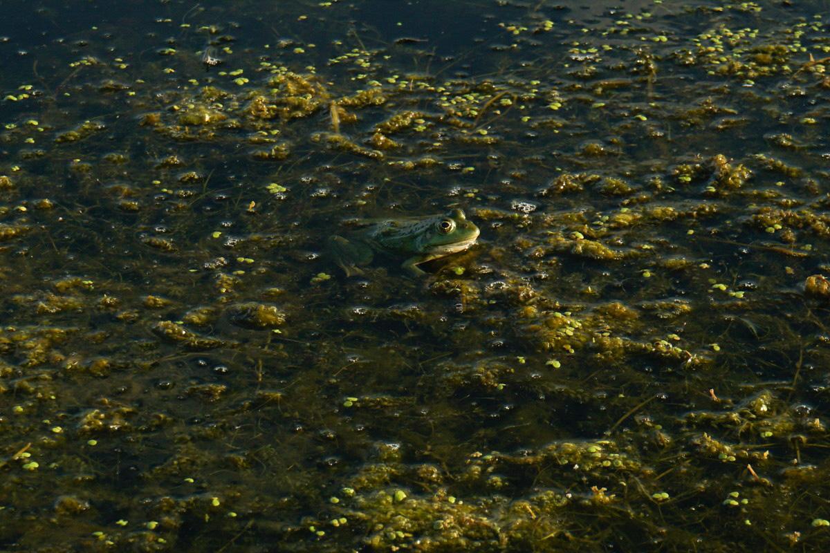 Froschbeobachtung im Donaudelta