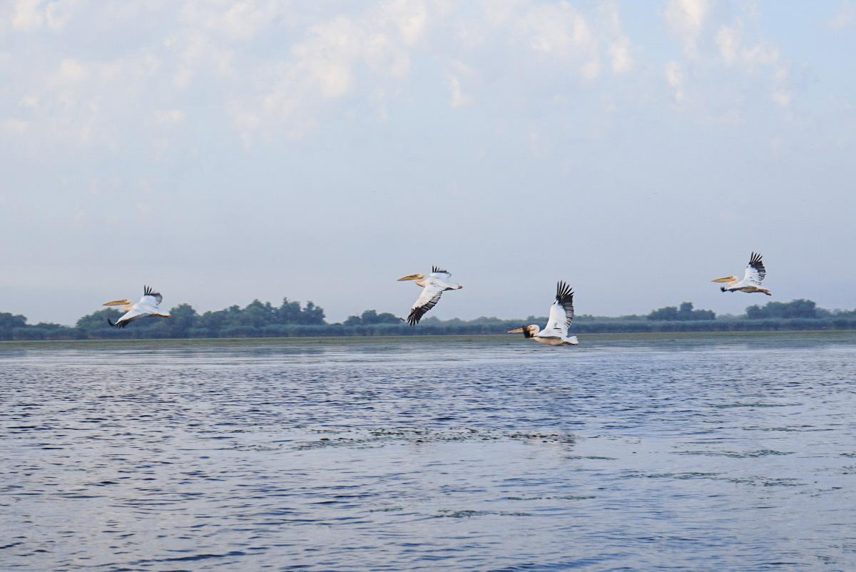 Preis für Bootstour im Donaudelta