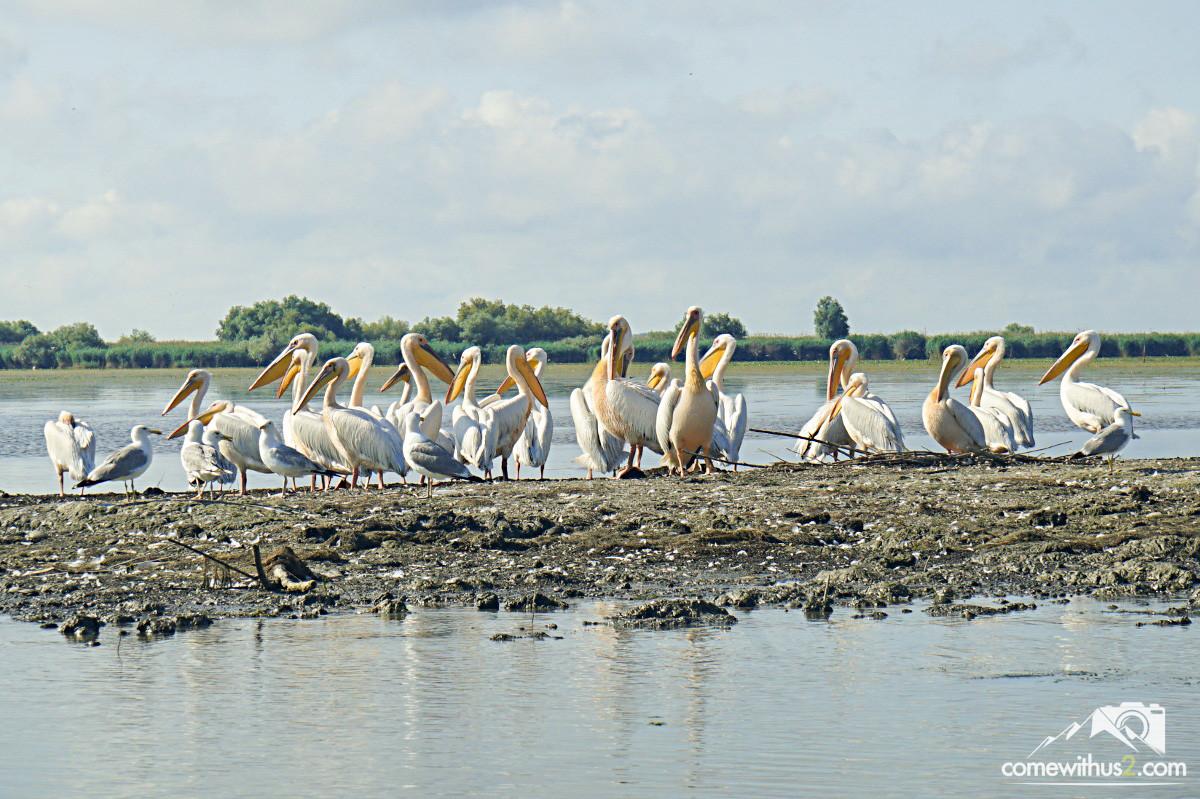 Pelikane im Donaudelta - Vogelexkursion Bootstour