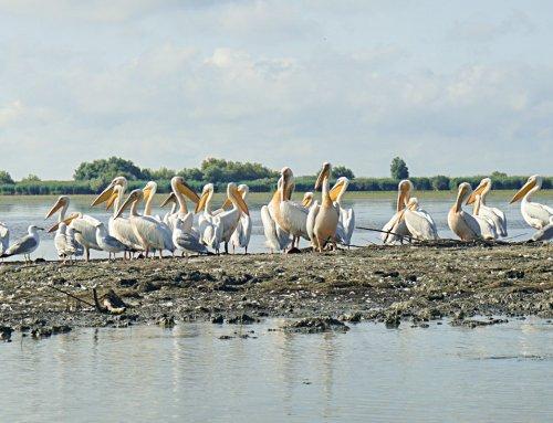 Bootstour durchs Donaudelta – so klappt das!