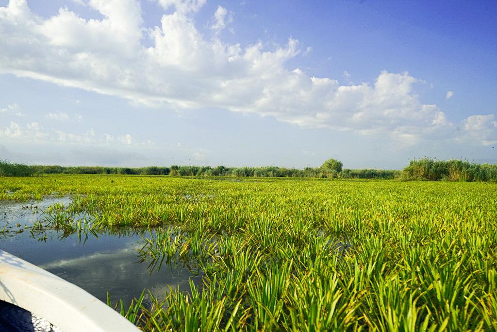 Donaudelta mit kleinem Boot erkunden - Preise und Kosten