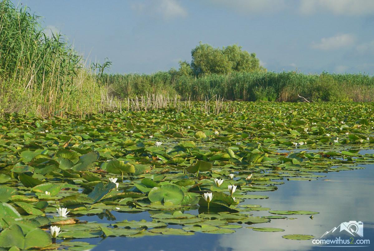 Donaudelta - Pflanzen- und Tierparadies