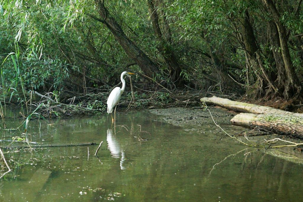 Vogelbeobachtung im Donaudelta