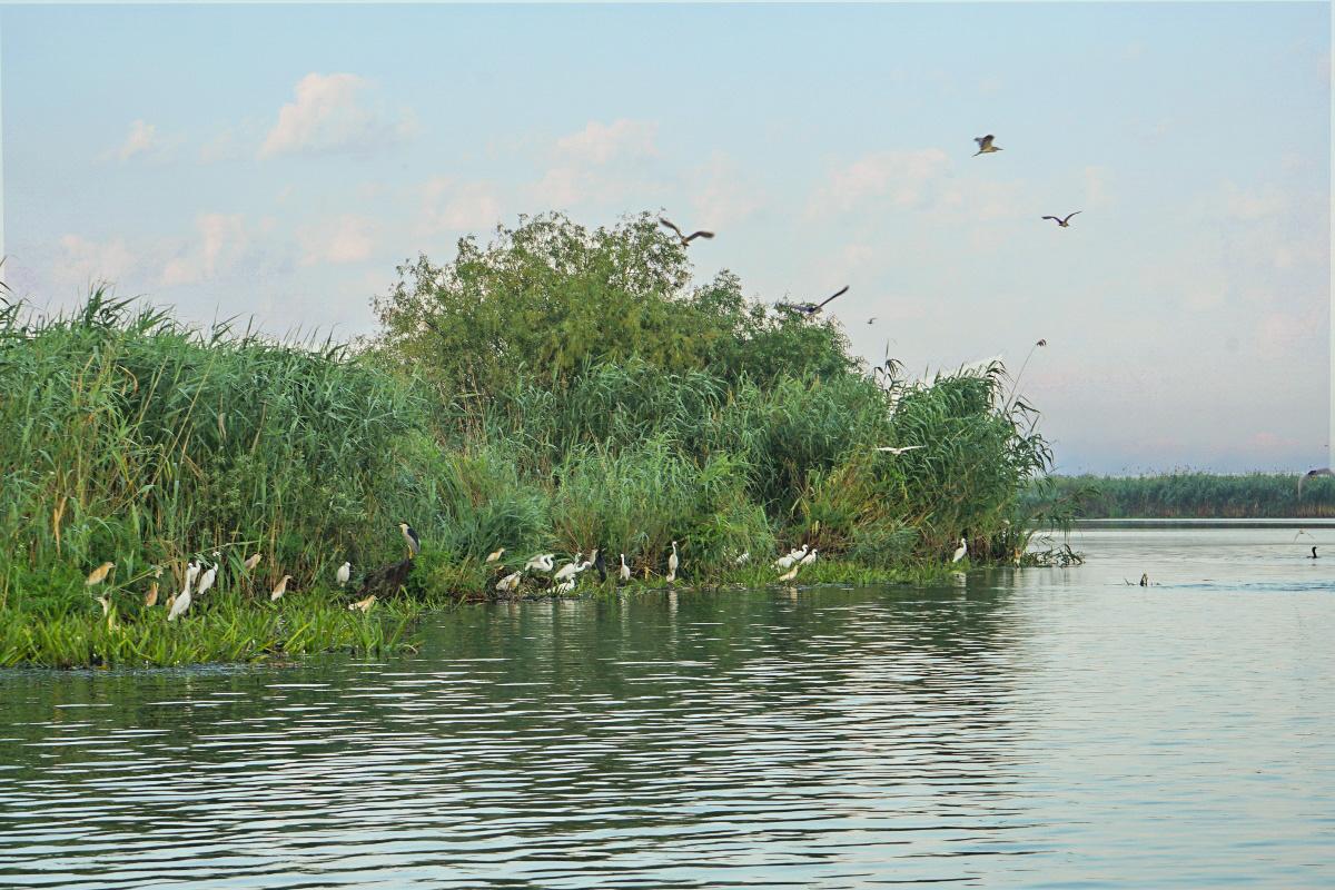 Bootstour durch das Donaudelta schädlich für die Vögel?