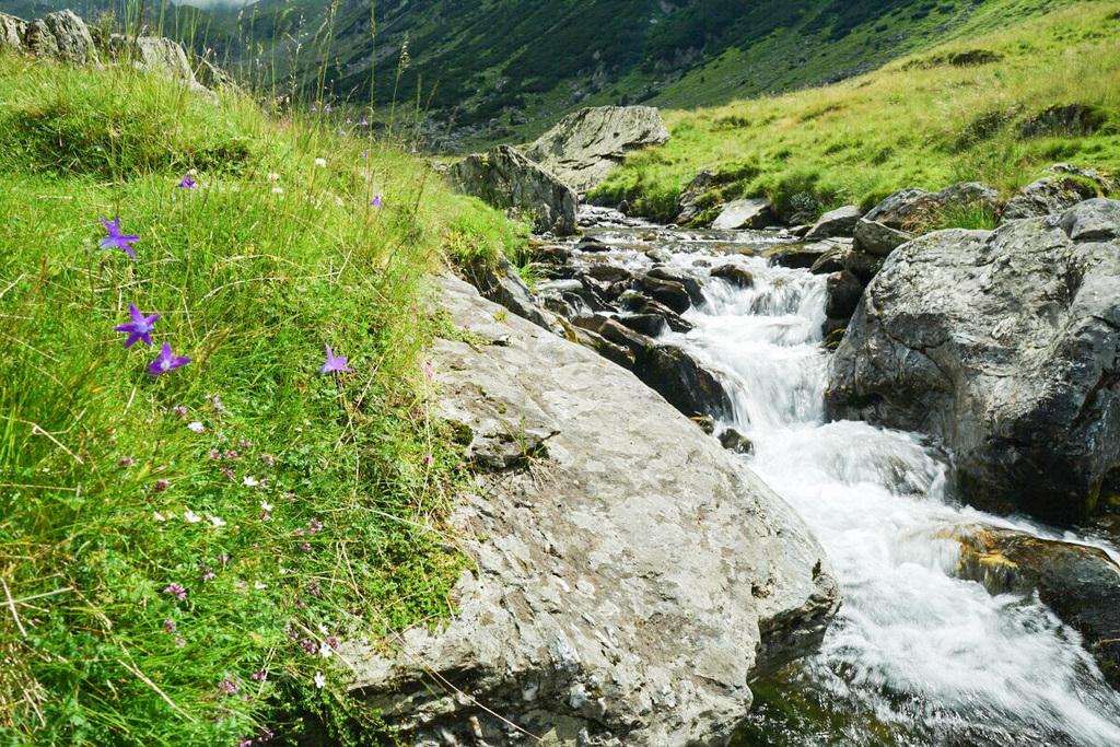 Naturschutz am Transfăgărășan Pass in Rumänien