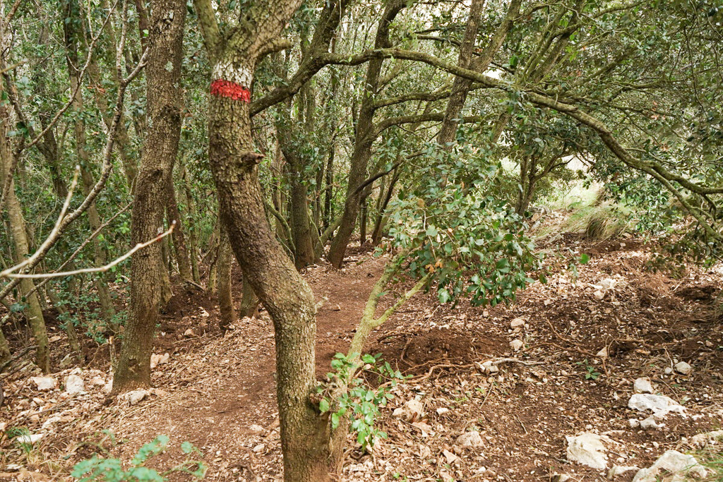 Wald - Monte Circeo
