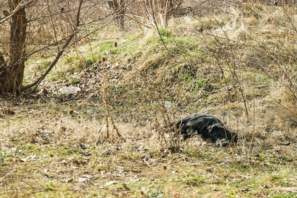 Hund liegt auf Wiese in Sonne - Tierschutz Bosnien