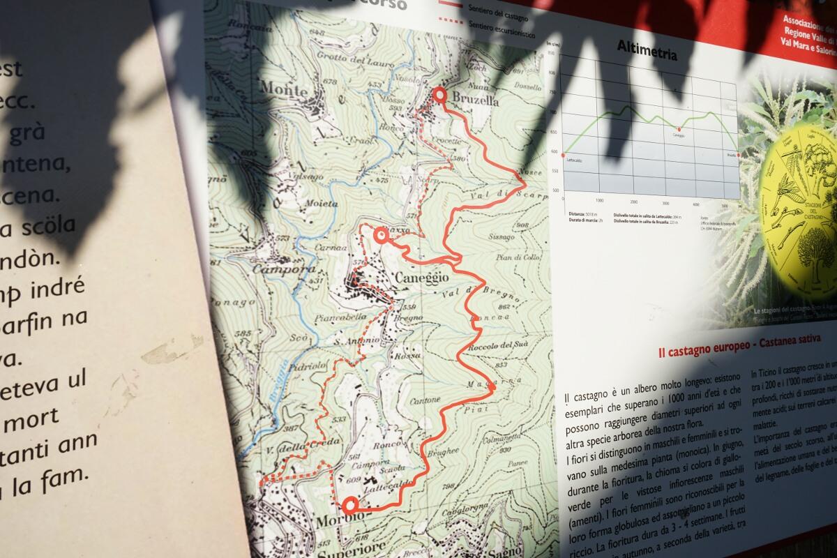 Sentee da l'Albur - Kastanienwanderung im Tessin