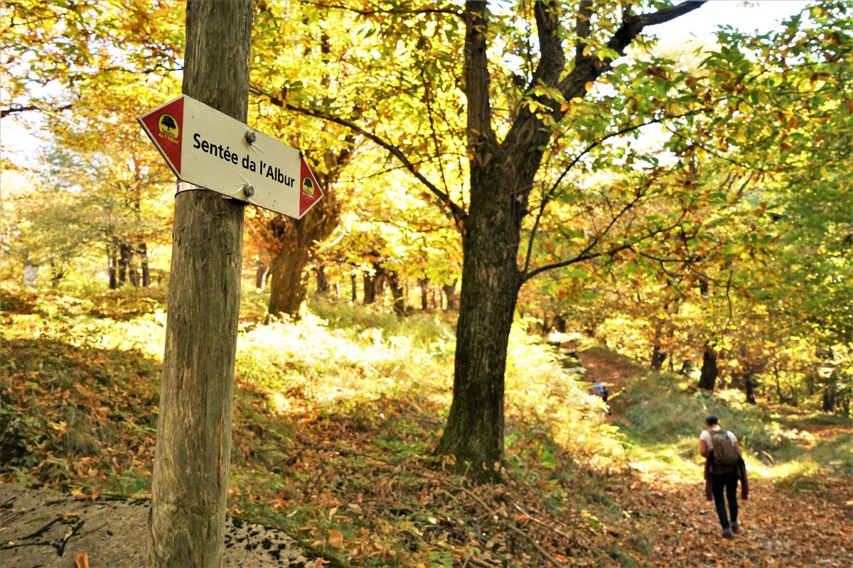 Sentee de l'albur - Maron-Lehrpfad im Tessin / Herbstwanderung
