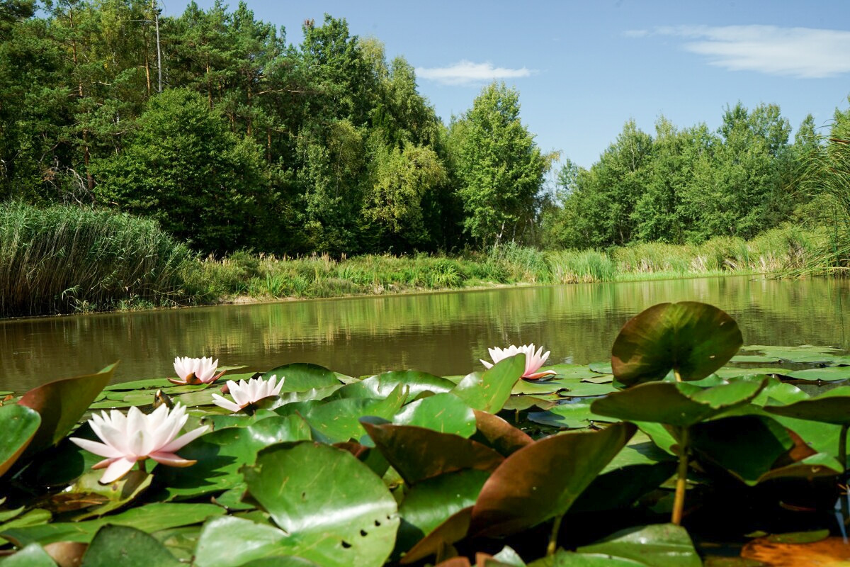Seerosen in der Slowakei, Wandern