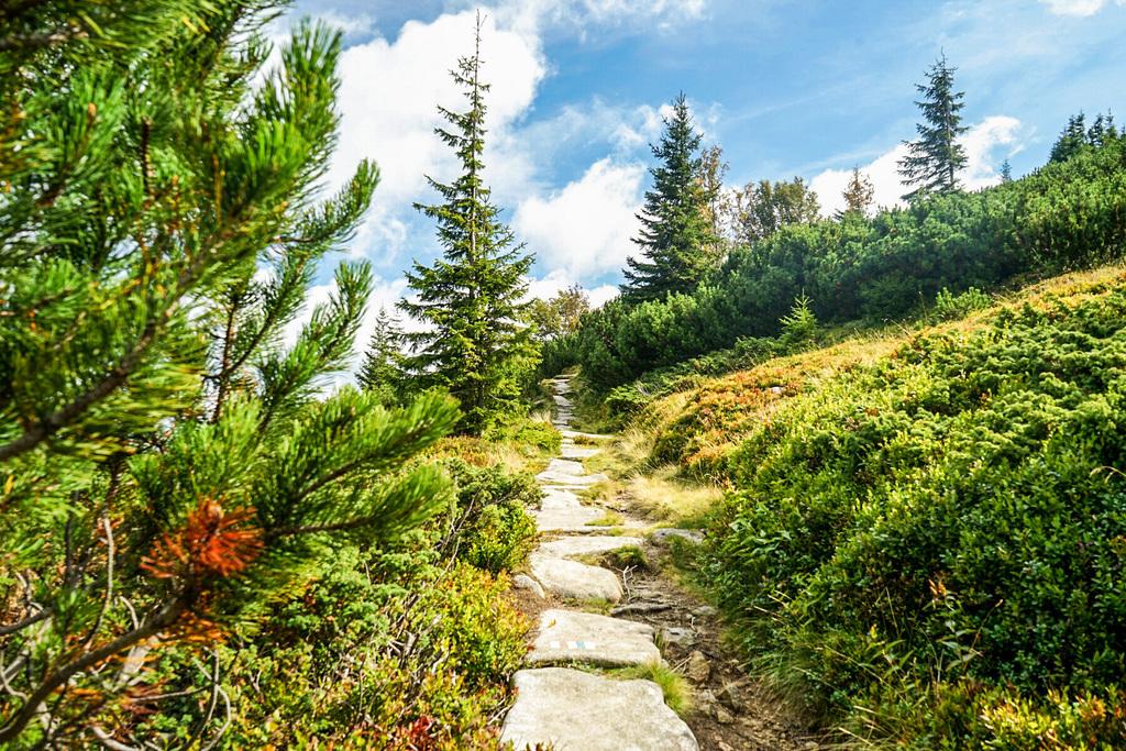 Chopok Wandern Slowakei Niedere Tatra