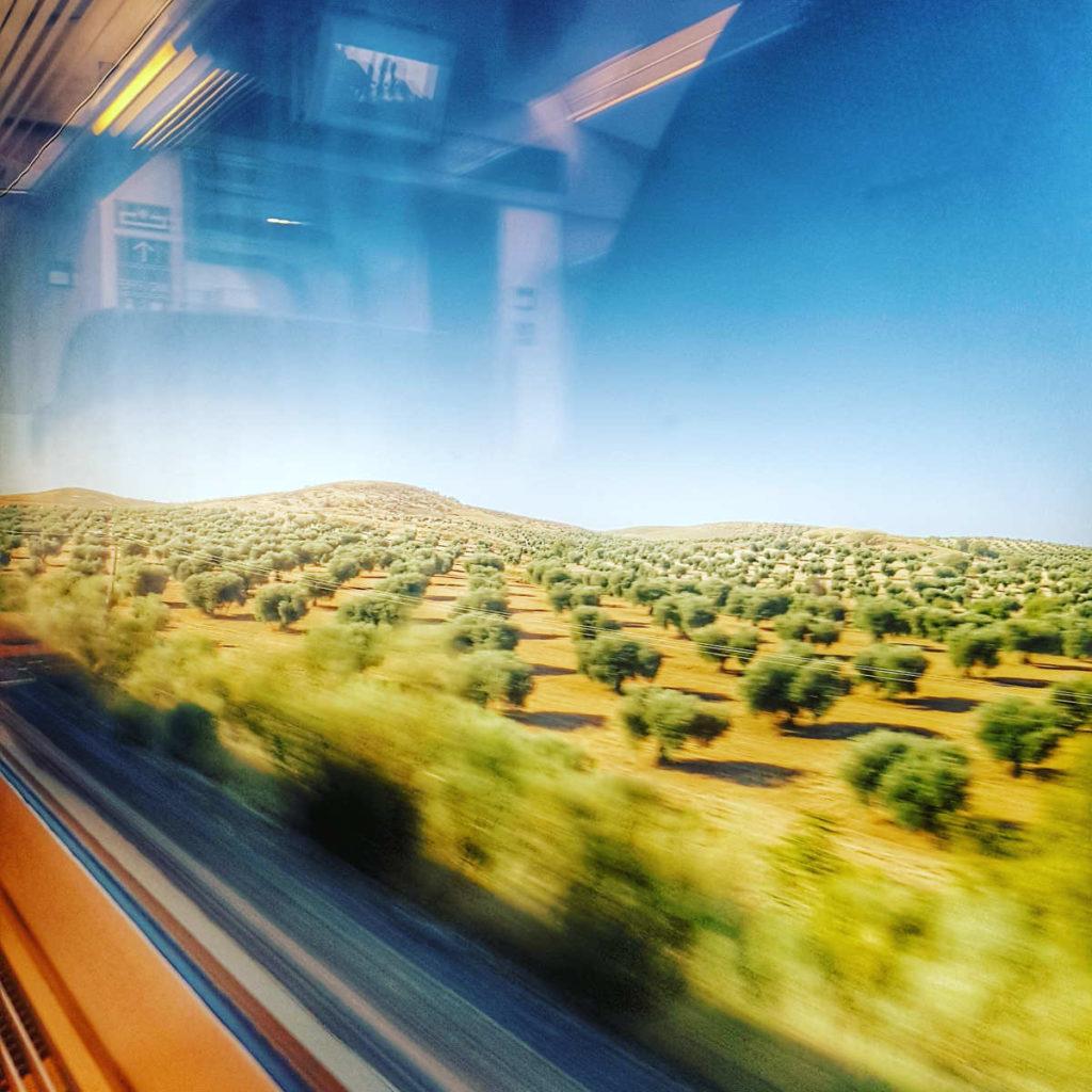 Olivenplantage verzerrt von der Geschwindigkeit - Rundreise Andalusien, Reiseführer Andalusien