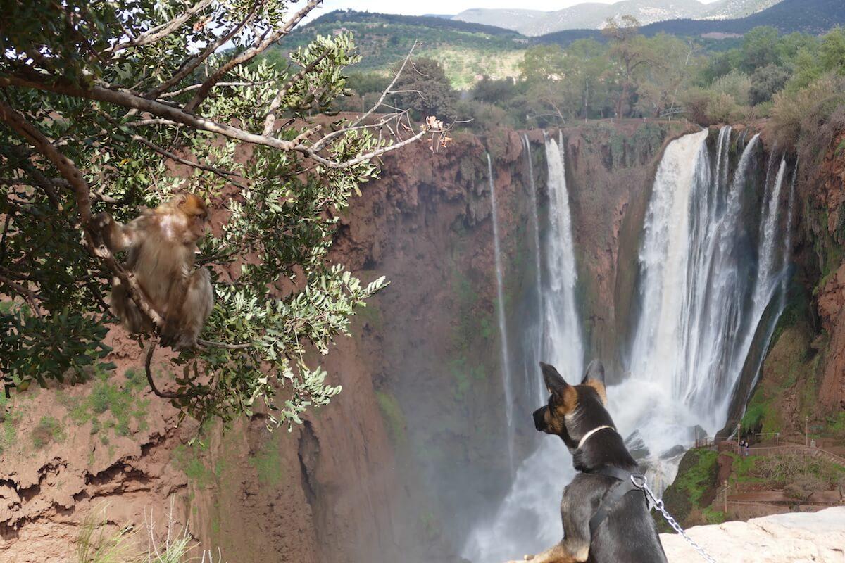 Jackson am Wasserfall