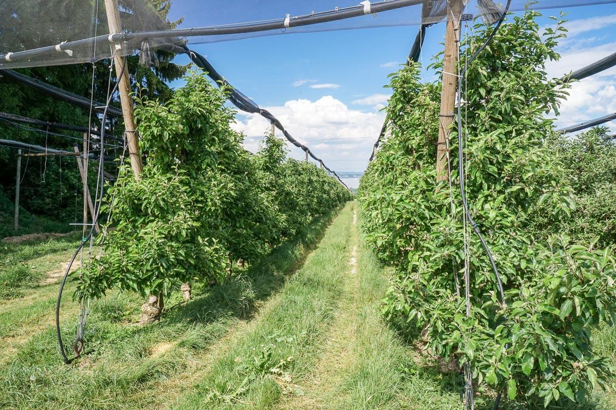 Obstbau und Events: Feierlenhof Altnau