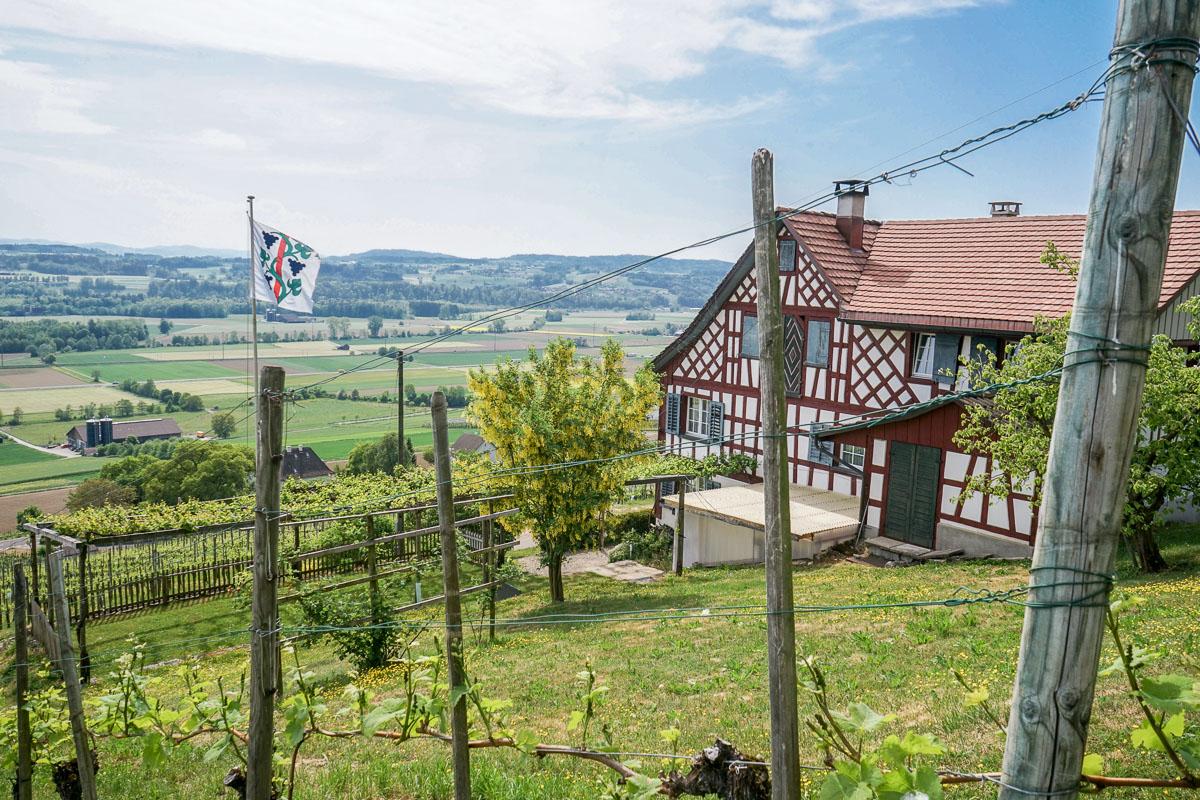 Weinweg Weinfelden: Themen-Wanderweg durch den Thurgau