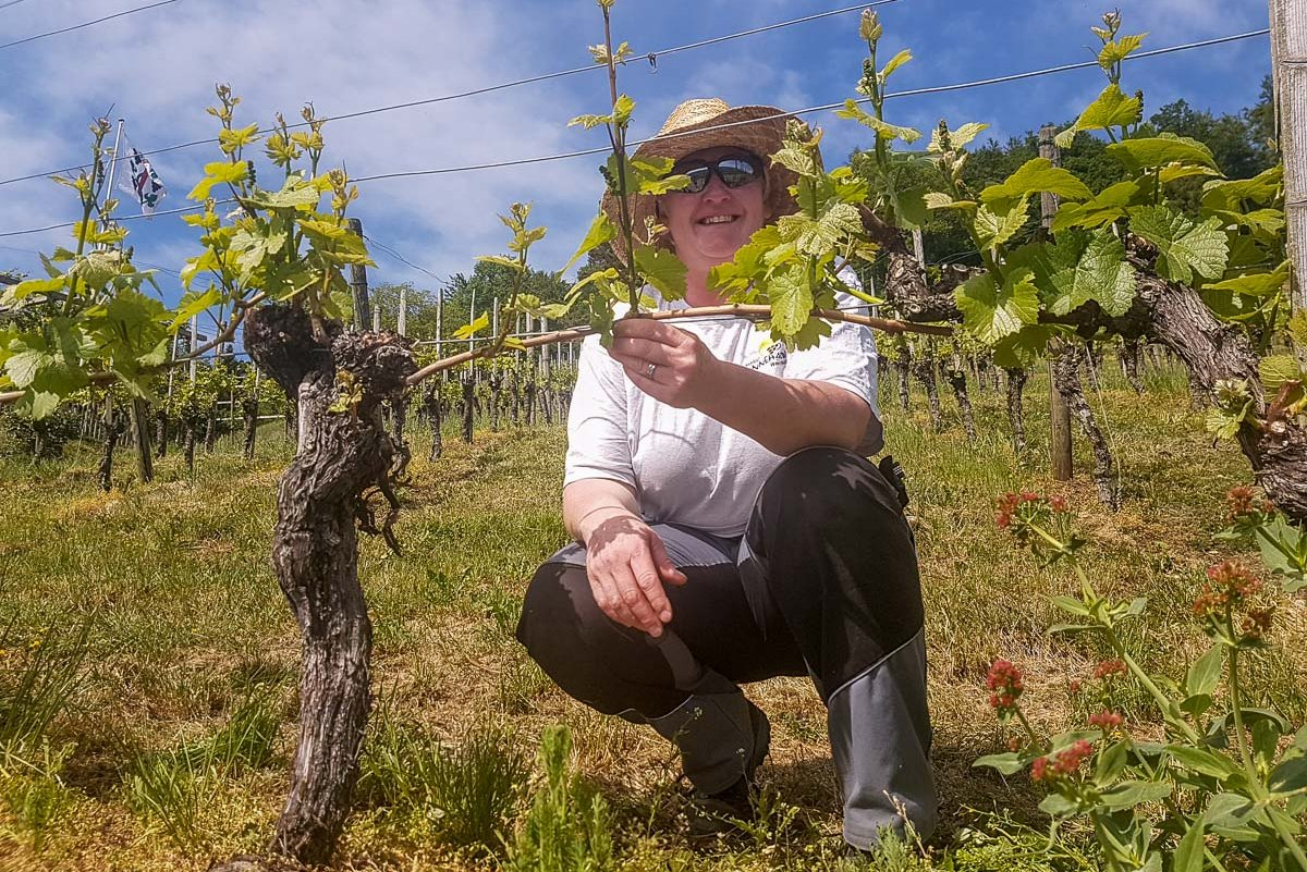 Rebgut Sunnehalte: Mithilfe im Rebberg, Weinverkauf ab Hof