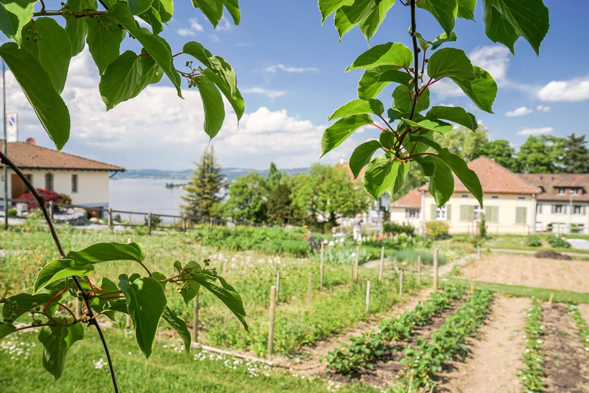 Gemüse- und Blumengarten des Arenenbergs