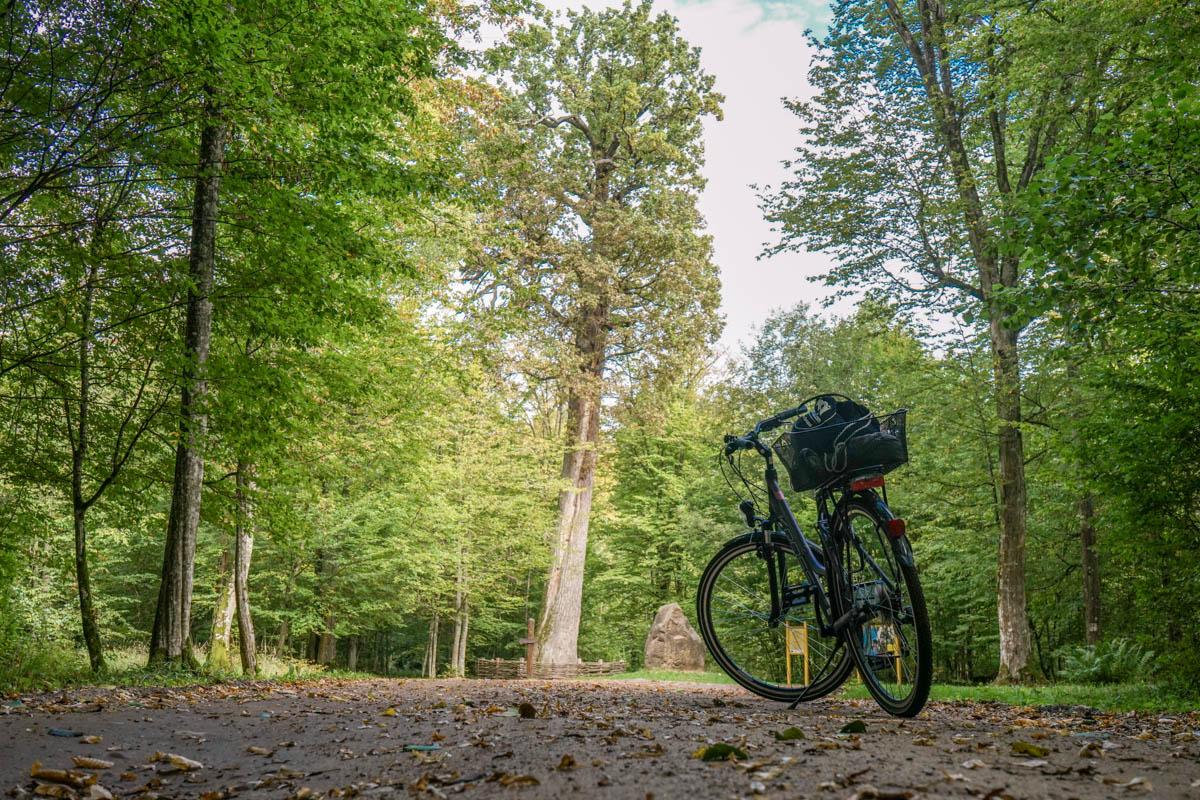 Fahrrad im Urwald